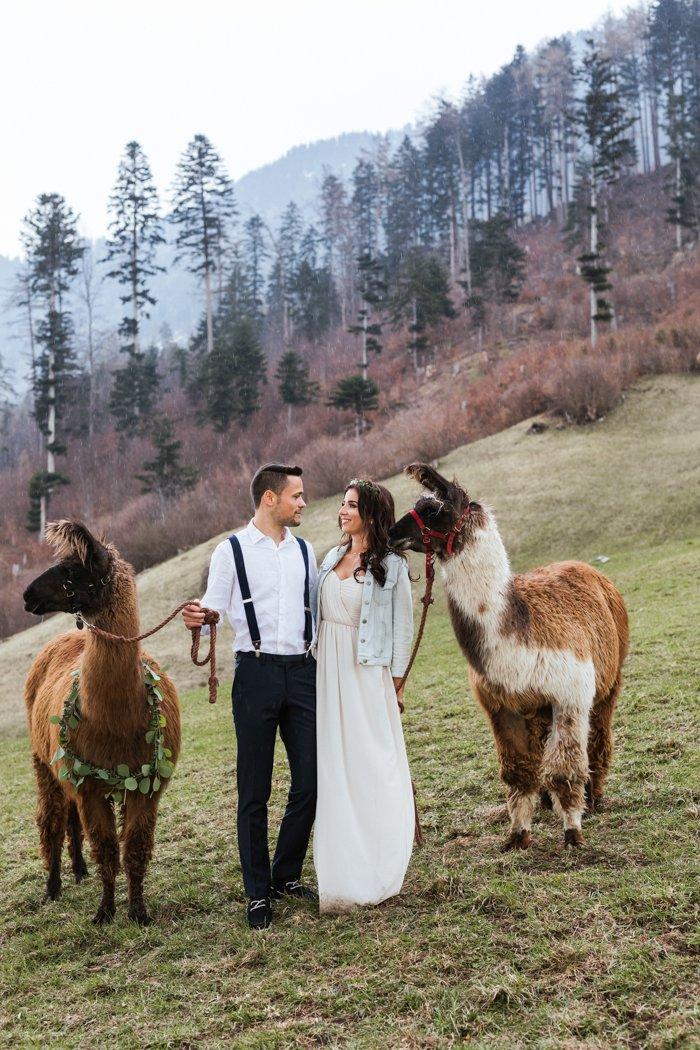 Trend Hochzeitslamas Was Ist Dabei Zu Beachten Hochzeit Um 3